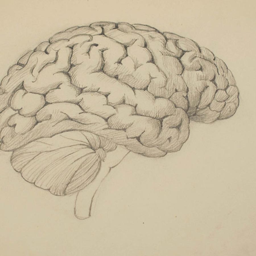 1-20-2-12_brain_1.jpg