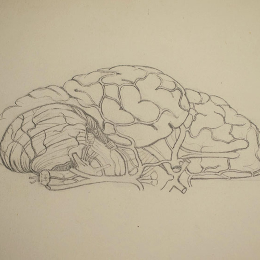 1-20-2-10-10_brain section_2.jpg