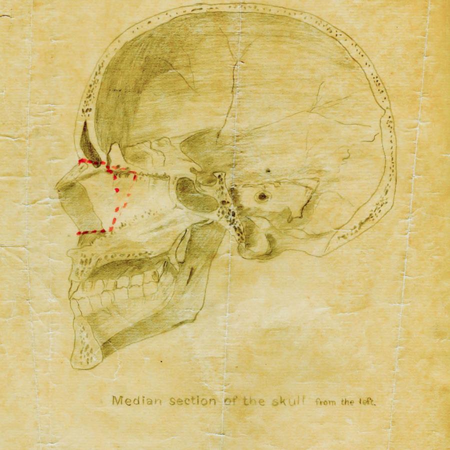 1-20-2-10-24_skull.jpg