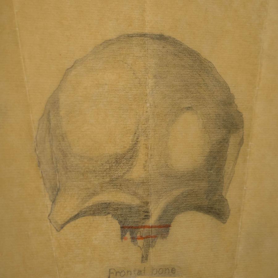 1-20-2-10-23_frontal Bone_2.jpg